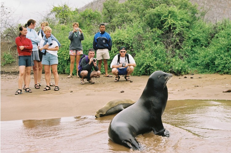 Photographing a Sea Lion