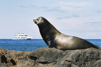 Sea Lion Galapagos Islands