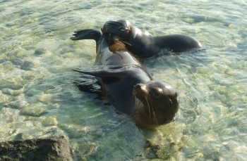 Galapagos Islands Land Based Tour